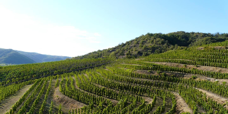 Vue sur les vignes de Crozes Hermitage